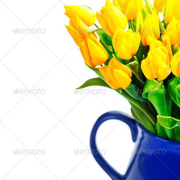 yellow tulips - Stock Photo - Images