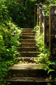 Steps El Yunque Rainforest Puerto Rico - PhotoDune Item for Sale