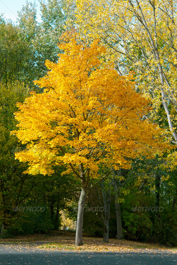 Autumn - Stock Photo - Images