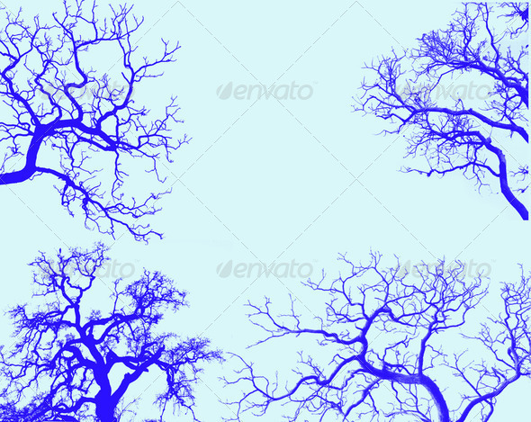 siluette branch of tree - Stock Photo - Images