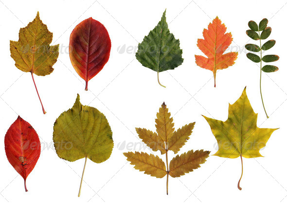 collection of leafs - Stock Photo - Images