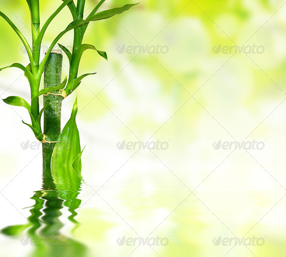 bamboo leaves reflected in water - Stock Photo - Images