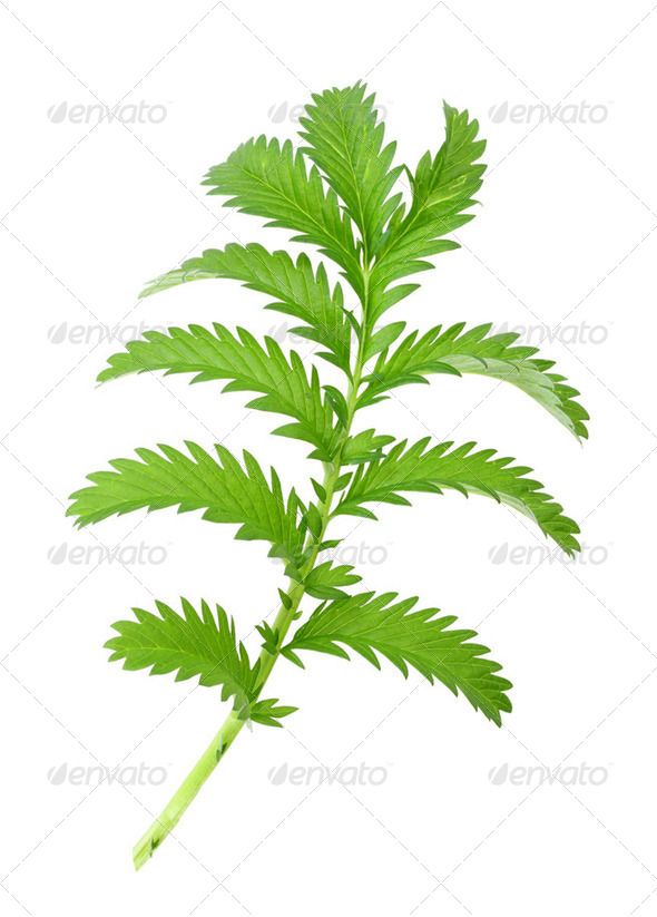 One green leaf - Stock Photo - Images