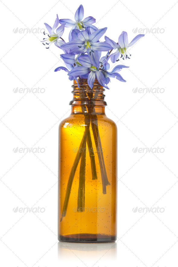 Blue Hepatica Flowers In A Bottle - Stock Photo - Images