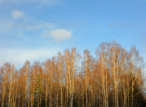 Trees and sky - Stock Photo - Images