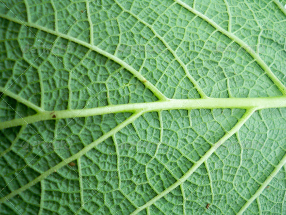 Macro photo of leaf - Stock Photo - Images