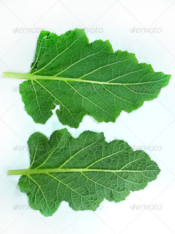 Leaf of a broccoli - Stock Photo - Images