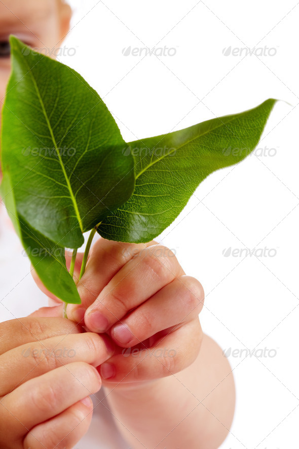 Leaves in hands - Stock Photo - Images