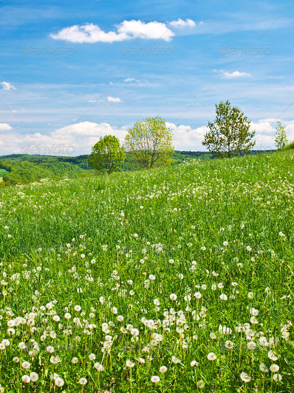 PhotoDune meadow in spring with a blue sky and clouds 3883690