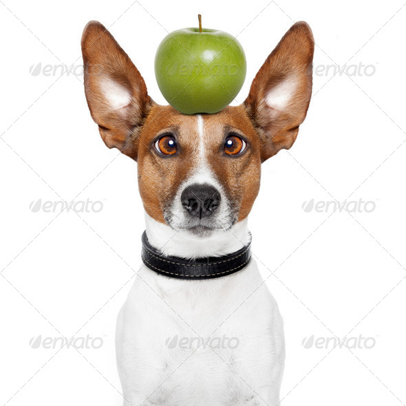 crazy dog with big lazy eyes and an apple - Stock Photo - Images
