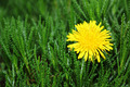 Grass with Yellow Flower - PhotoDune Item for Sale