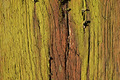 Cracked wood structure covered with moss - PhotoDune Item for Sale