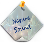 Nature Sound