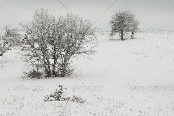 Winter landscape with icy trees. - Stock Photo - Images