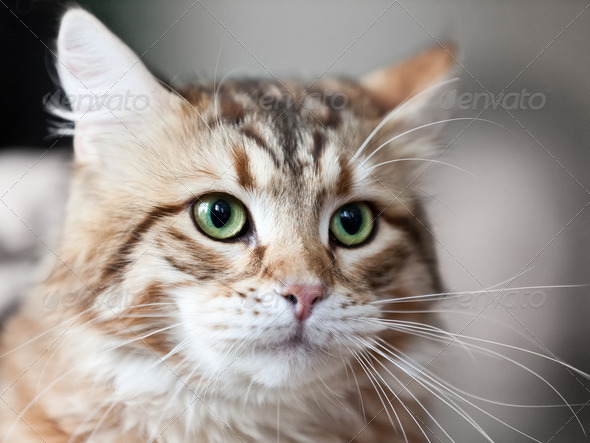 Cat animal - Stock Photo - Images