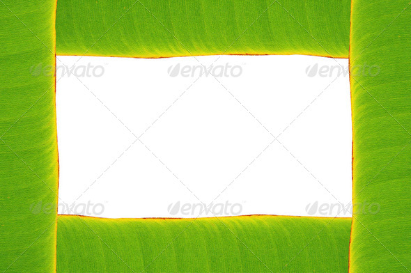 banana leaf frame - Stock Photo - Images