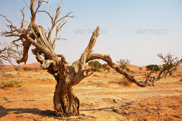 Namib - Stock Photo - Images