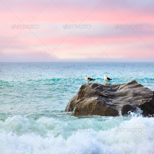 Tasman sea - Stock Photo - Images