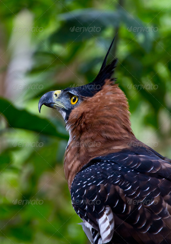 Bird of prey side - Stock Photo - Images