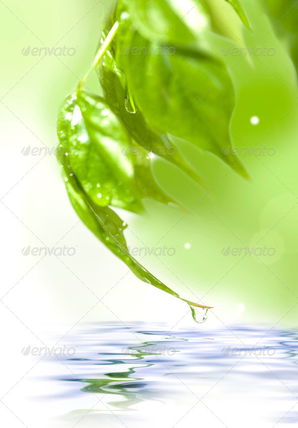Green fresh leaves over water - Stock Photo - Images