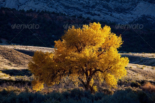 Autumn tree - Stock Photo - Images