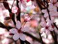 Springtime Light - PhotoDune Item for Sale