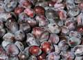 Damsons - Freshly Picked - PhotoDune Item for Sale