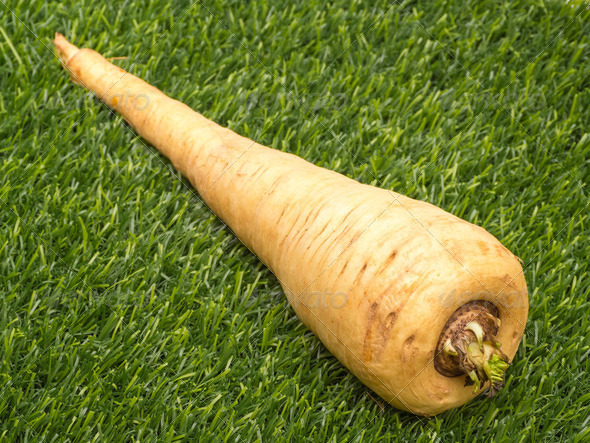 Parsnip in Grass - Stock Photo - Images
