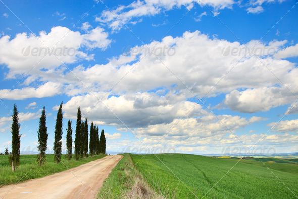 Tuscany, Cypress Trees, white road, green field, Siena, Italy. - Stock Photo - Images