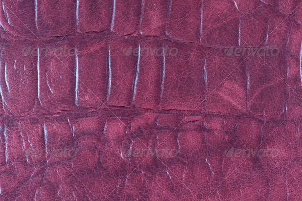 Crocodile leather    - Stock Photo - Images