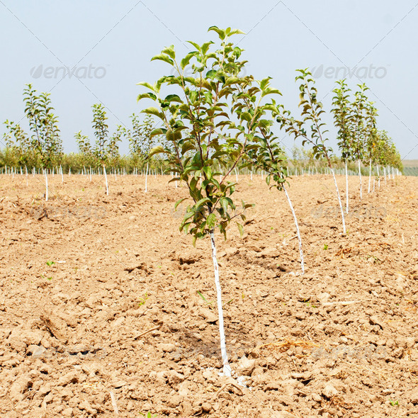 Spring garden with young fruit trees - Stock Photo - Images