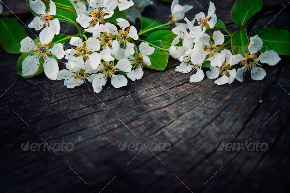 Apple blossom - Stock Photo - Images