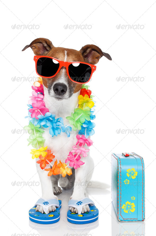 tourist dog with hawaiian  lei and a bag - Stock Photo - Images