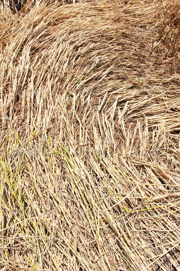 Straw texture background, closeup - Stock Photo - Images