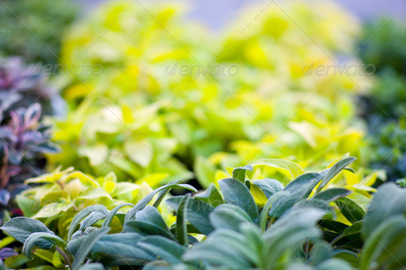 Plants - Stock Photo - Images