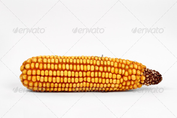 Corn - Stock Photo - Images
