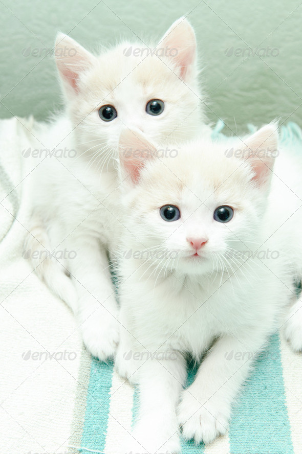 little kittens - Stock Photo - Images