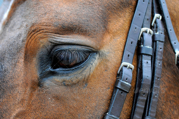 Horse Eye - Stock Photo - Images