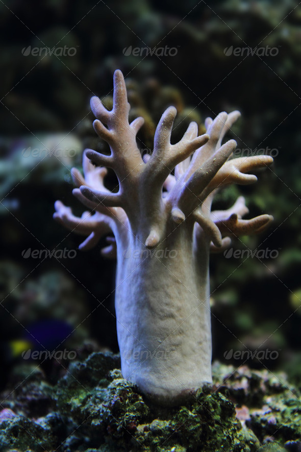 exotic coral - Stock Photo - Images