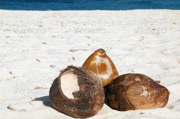 Still Life - Coconuts On A Tropical White Sand Beach - Stock Photo - Images