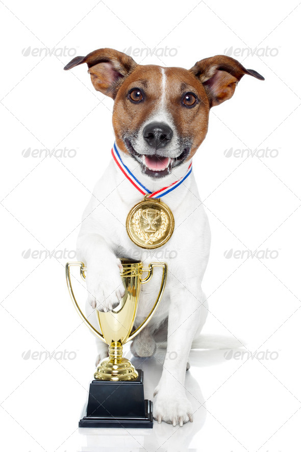 winner dog - Stock Photo - Images