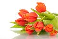 beautiful red tulips on white background - PhotoDune Item for Sale