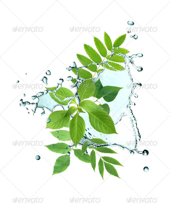 Leaves And Water - Stock Photo - Images