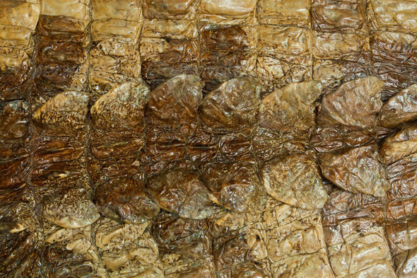 natural crocodile skin texture - Stock Photo - Images