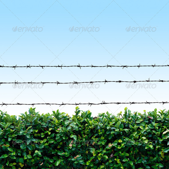 Barbed wire fence - Stock Photo - Images