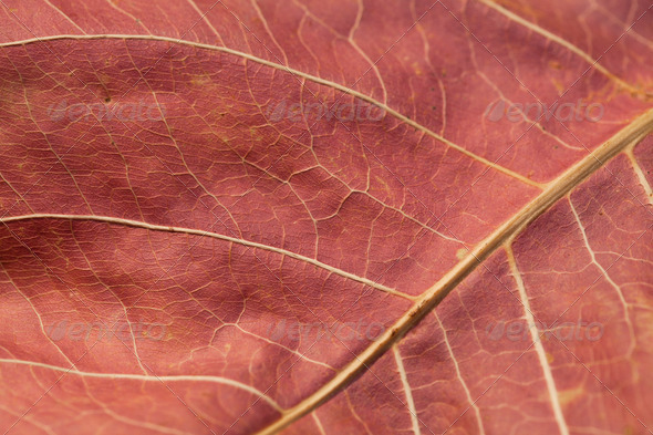 Abstract autumn leaf background - Stock Photo - Images