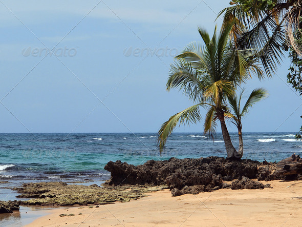 Coconut tree and sea - Stock Photo - Images