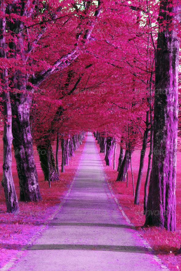 Purple park - Stock Photo - Images