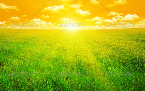 sunset on a spring field - Stock Photo - Images