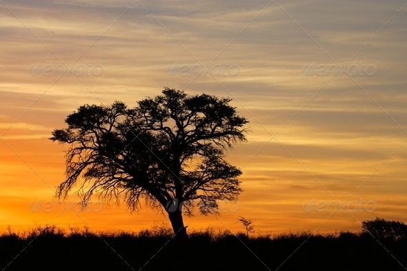 African sunset with silhouetted tree - Stock Photo - Images